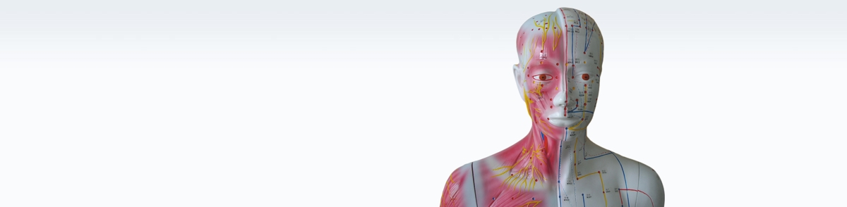 Akupunktur Modelle